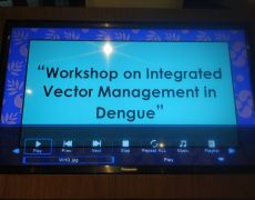International Workshop on Integrated Vector Management in Dengue